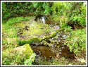 St Helen's Well at Eshton in North Yorkshire.