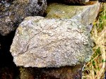 Rock with fossils at Twiston Nr Downham