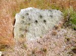 Cup-marked rock on Rivock Edge, west Yorks.